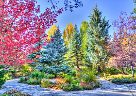 Colorful Forest, Colorado, USA