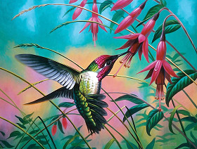 Cynthie Fisher - Hummingbird Haven